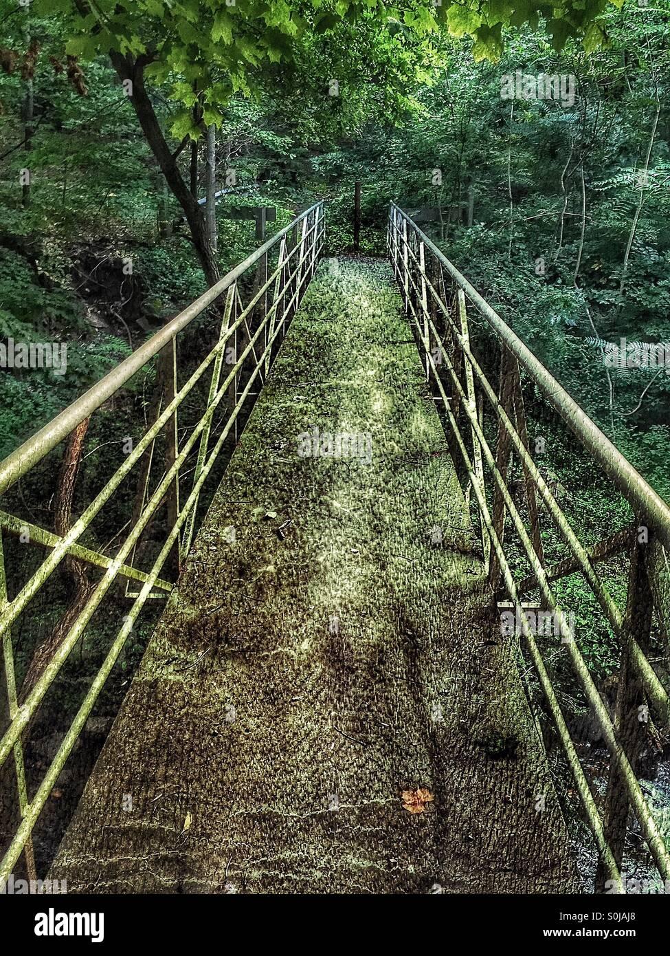 Decrepit woodland bridge - Stock Image