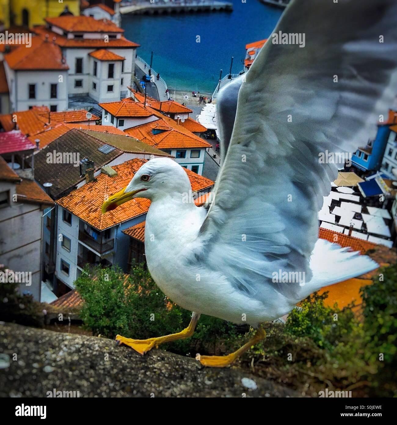 Seagull flying above if Cudillero sea coastal village, Asturias, Spain, EuropeStock Photo