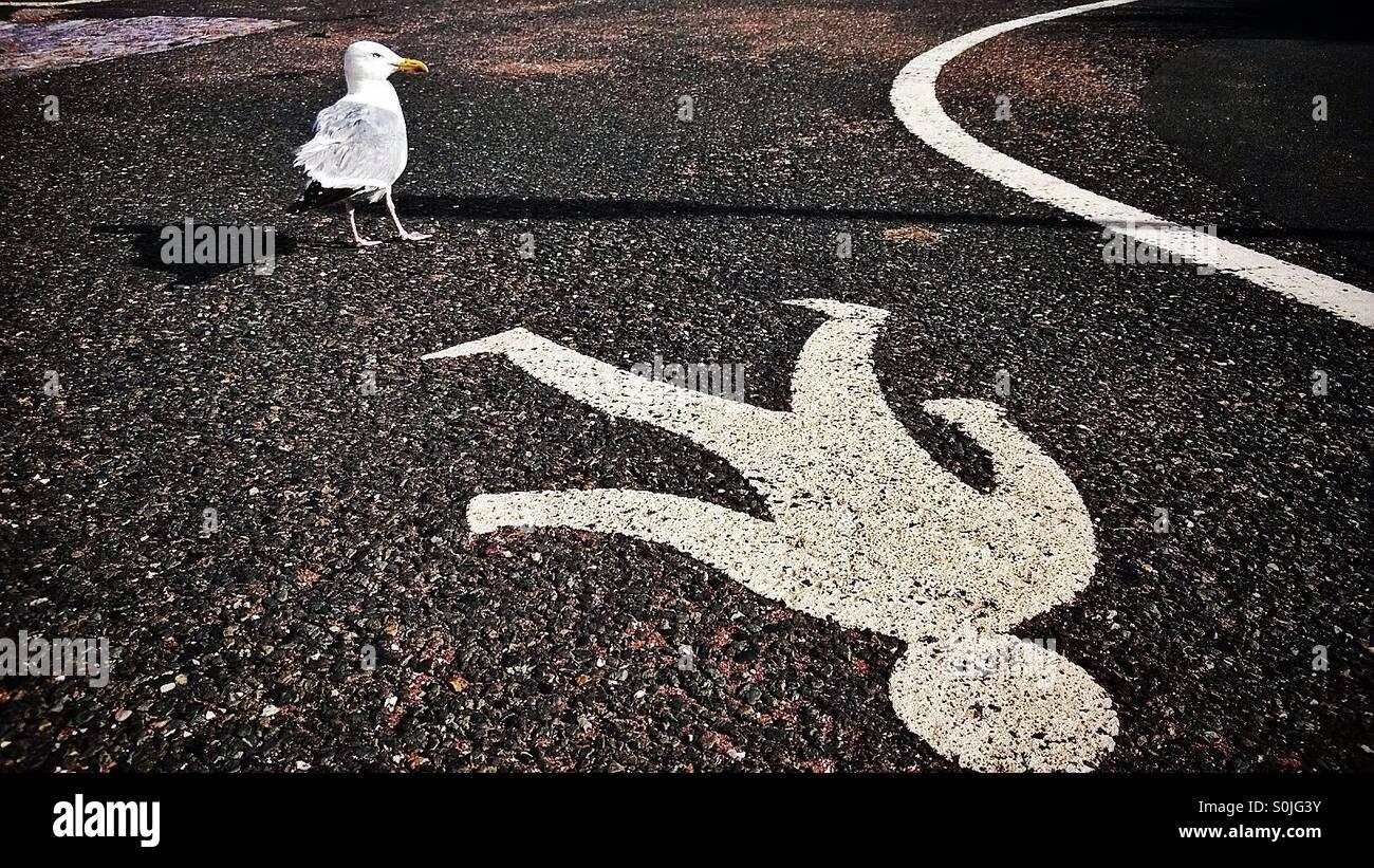 Seagull and pedestrian walkway Stock Photo