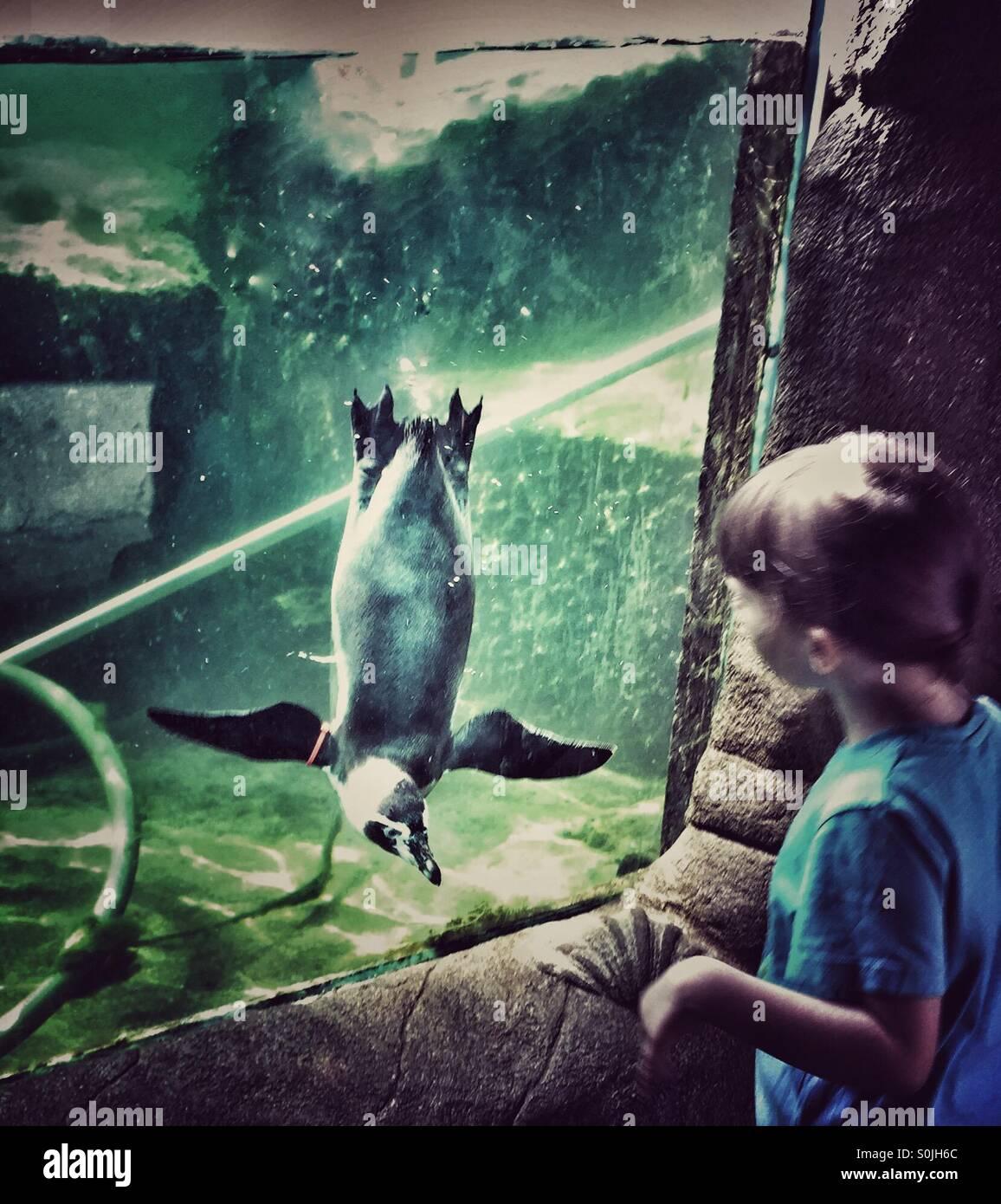 Child watching penguin watching child - Stock Image