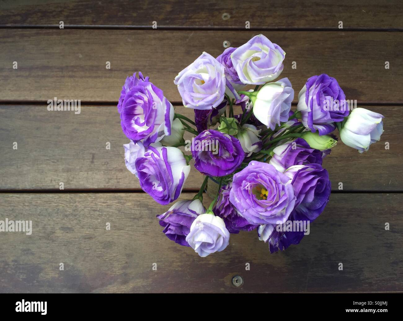 Lisianthus purple and white flowers - Stock Image