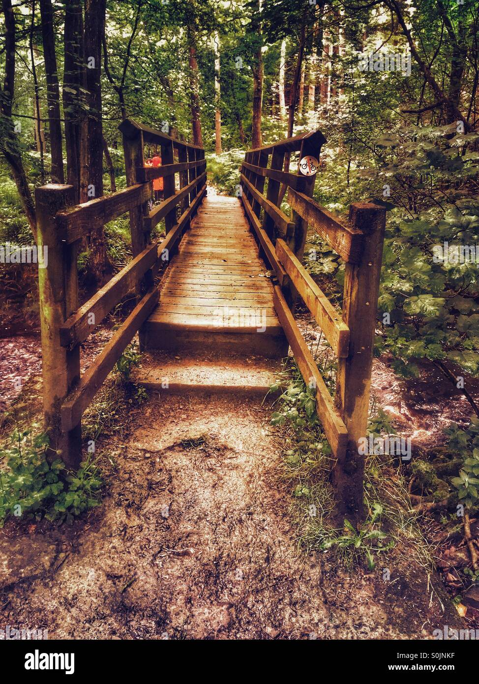 Bridge in the forest - Stock Image