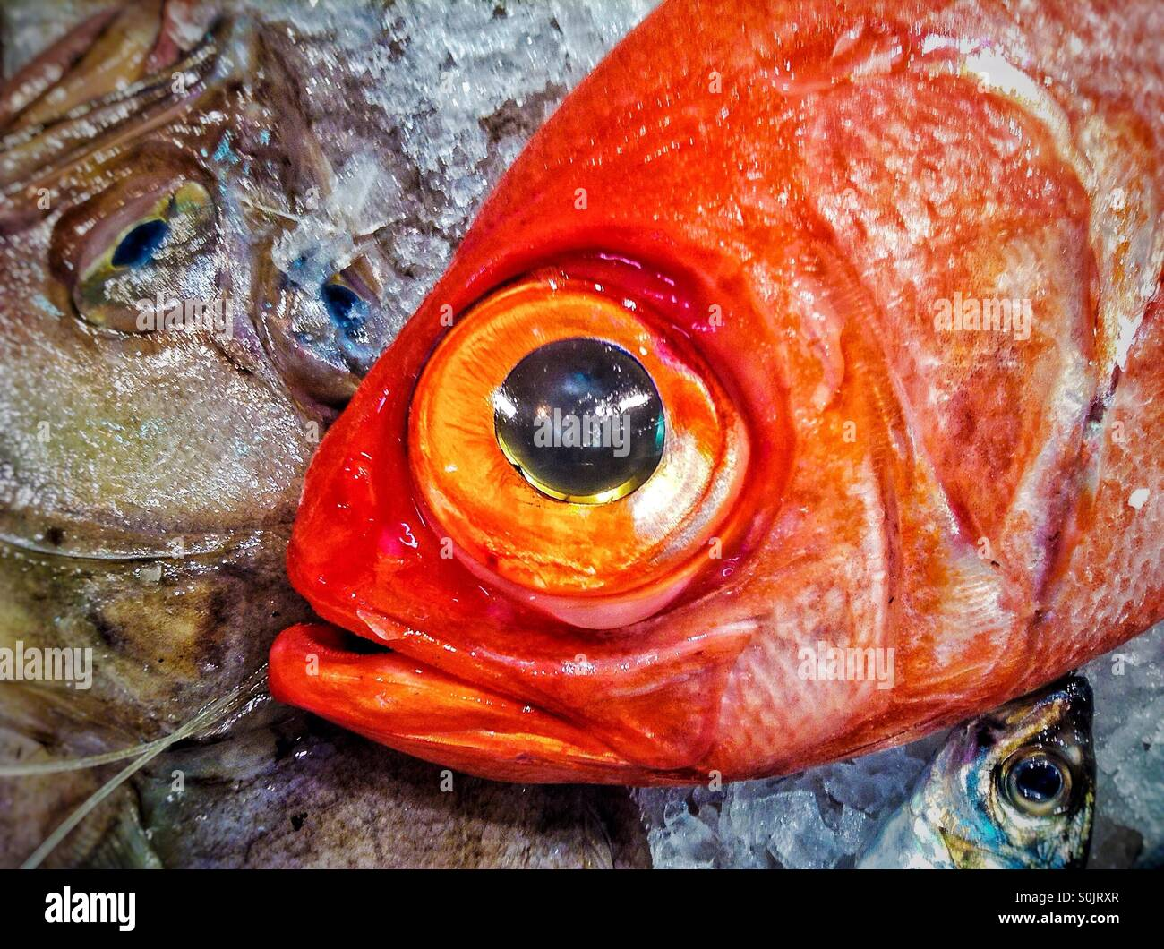Close up of red fish for sale Stock Photo