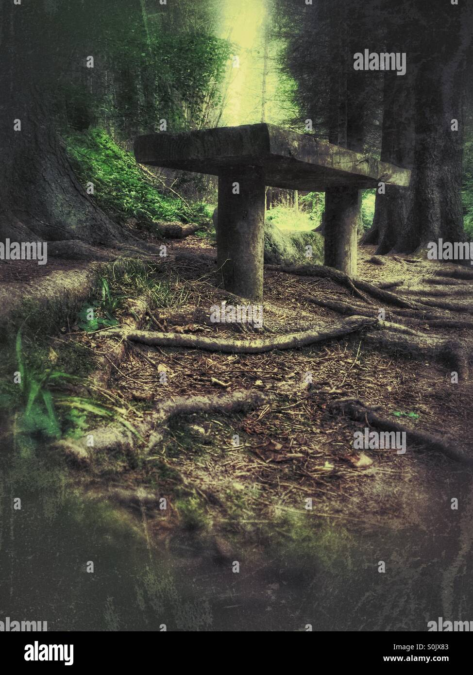 'Somewhere to sit', a wooden bench situated deep in the forest - Stock Image