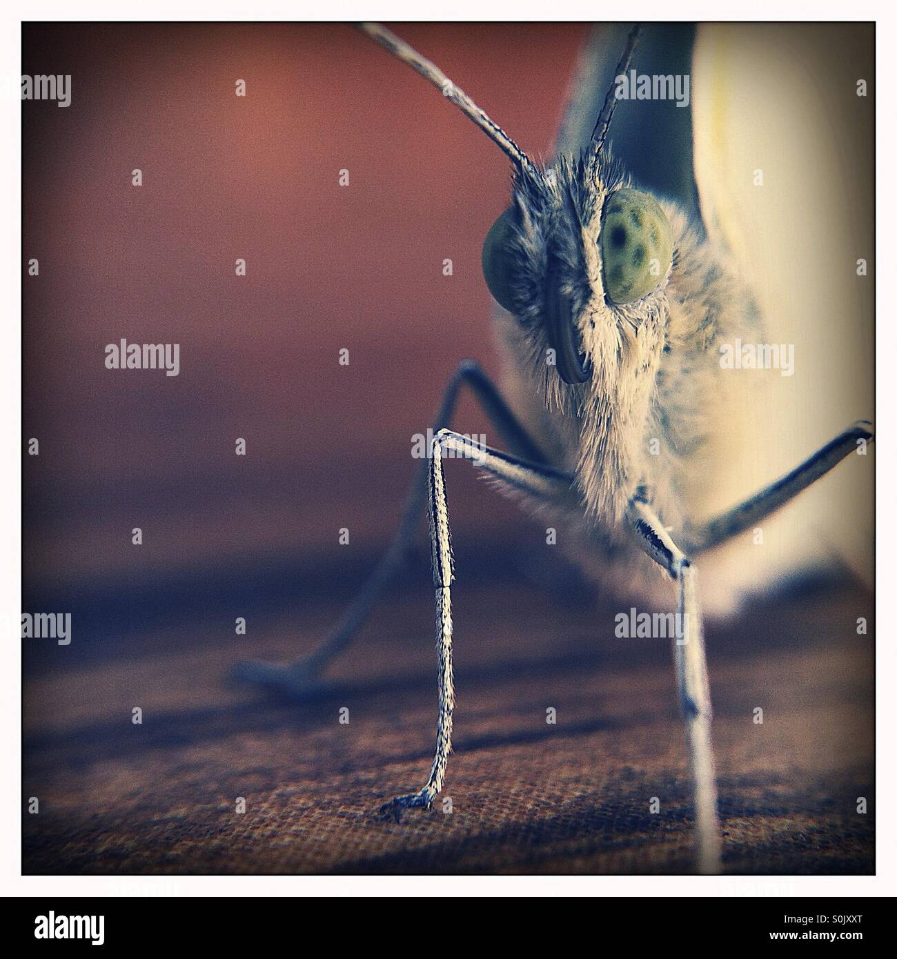 E very curious Moth Stock Photo