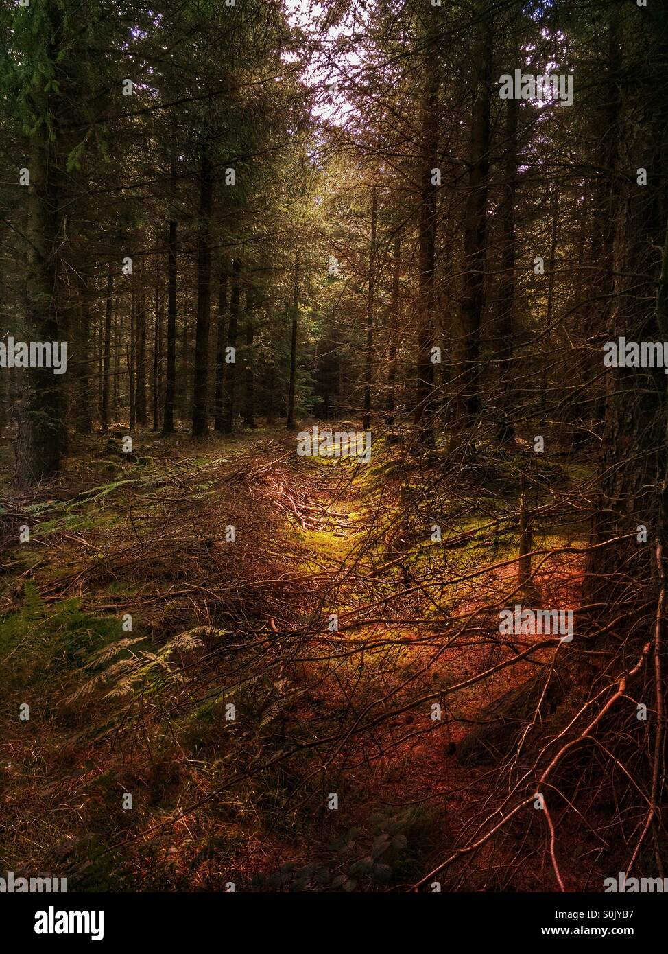 In the forest light - Stock Image