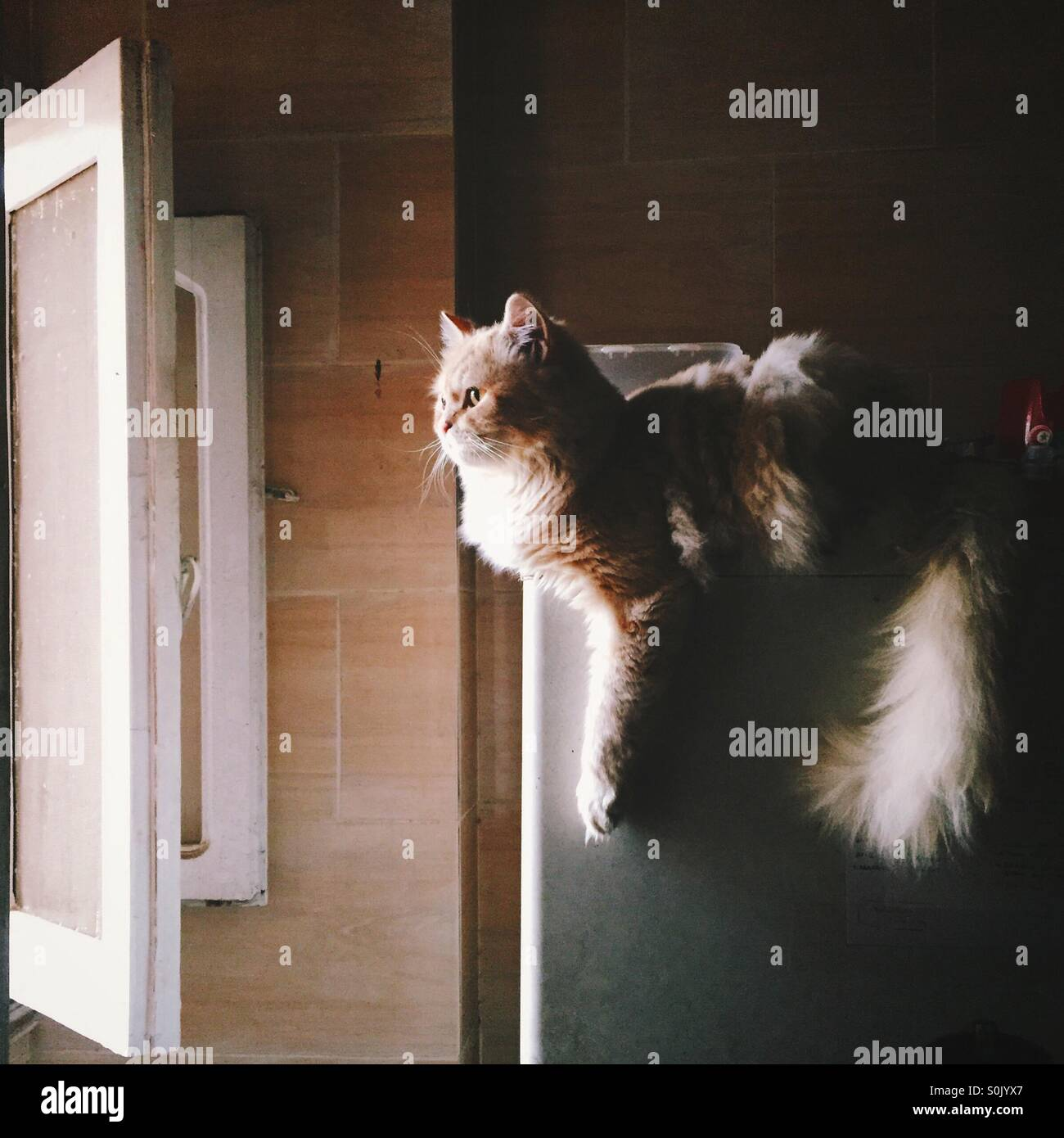Flying dutchcat! - Stock Image