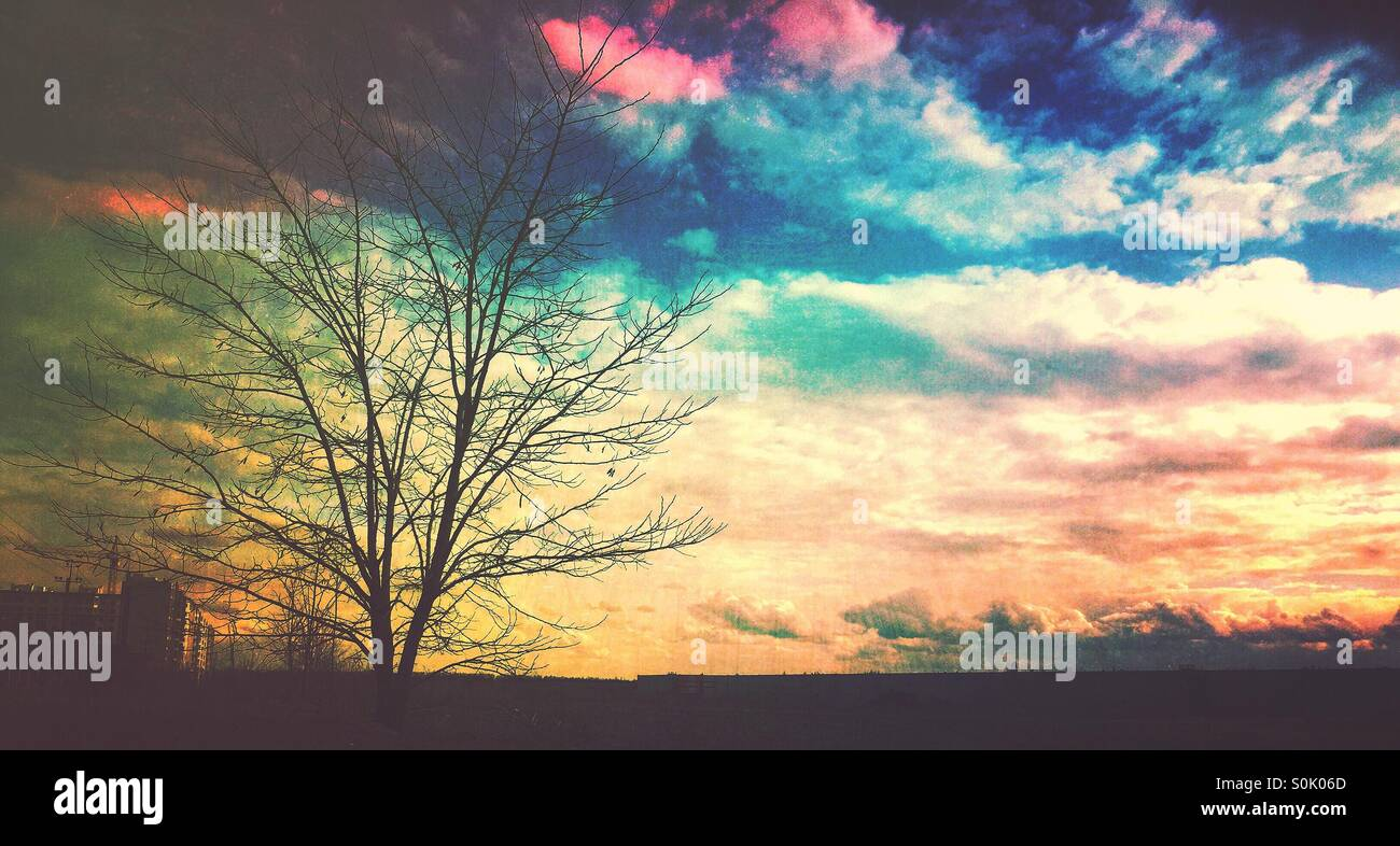 colored clouds and lonely tree with no leaves, photo edited by Mextures app - Stock Image