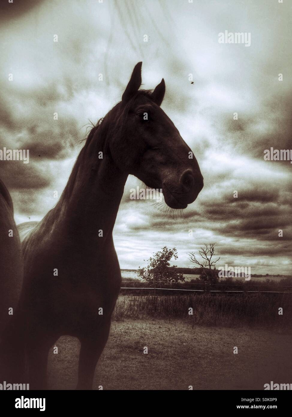 Horse in field - Stock Image