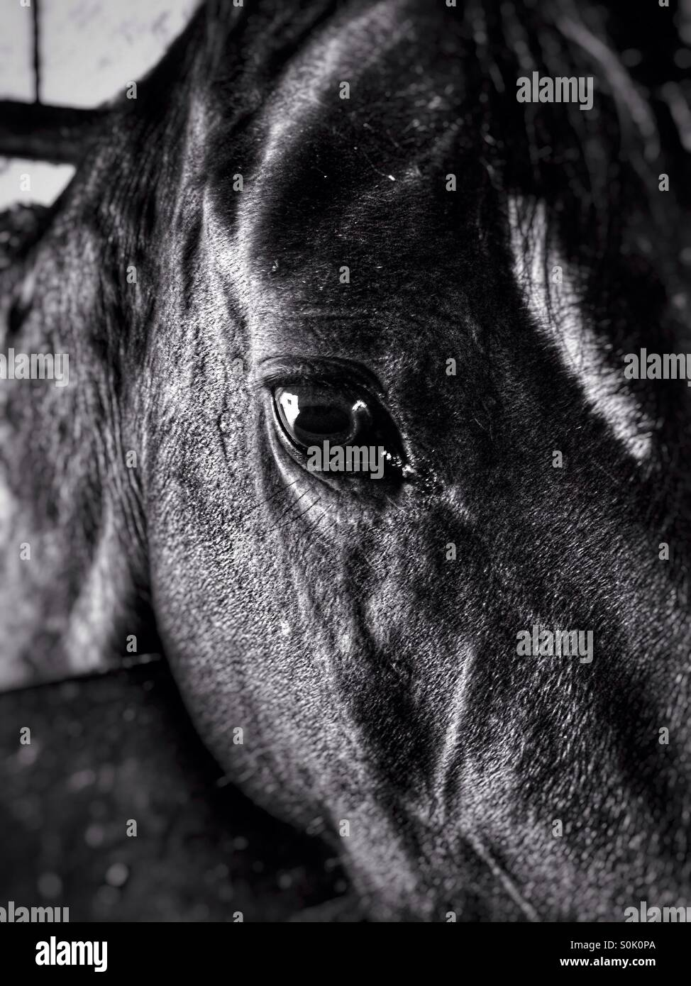 Horse face close-up - Stock Image