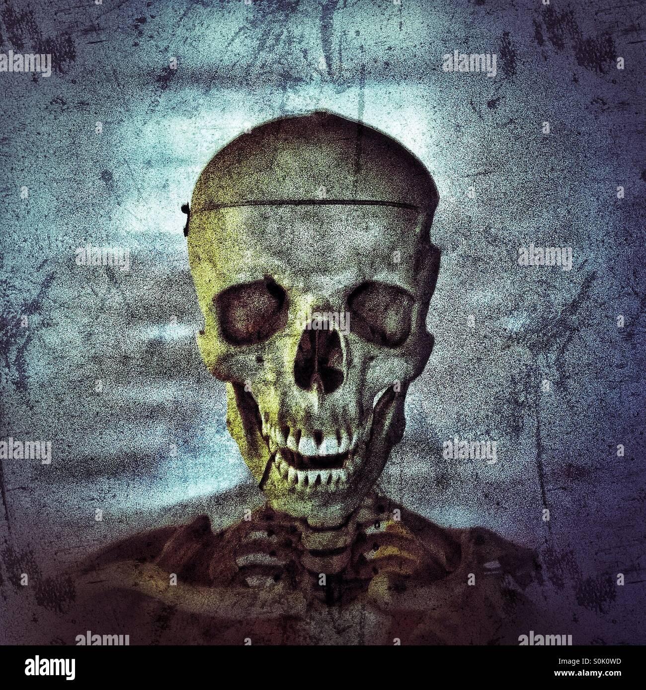Anatomical skeleton - Stock Image
