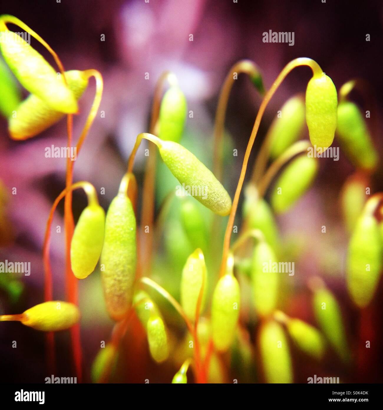 Grass macro Stock Photo