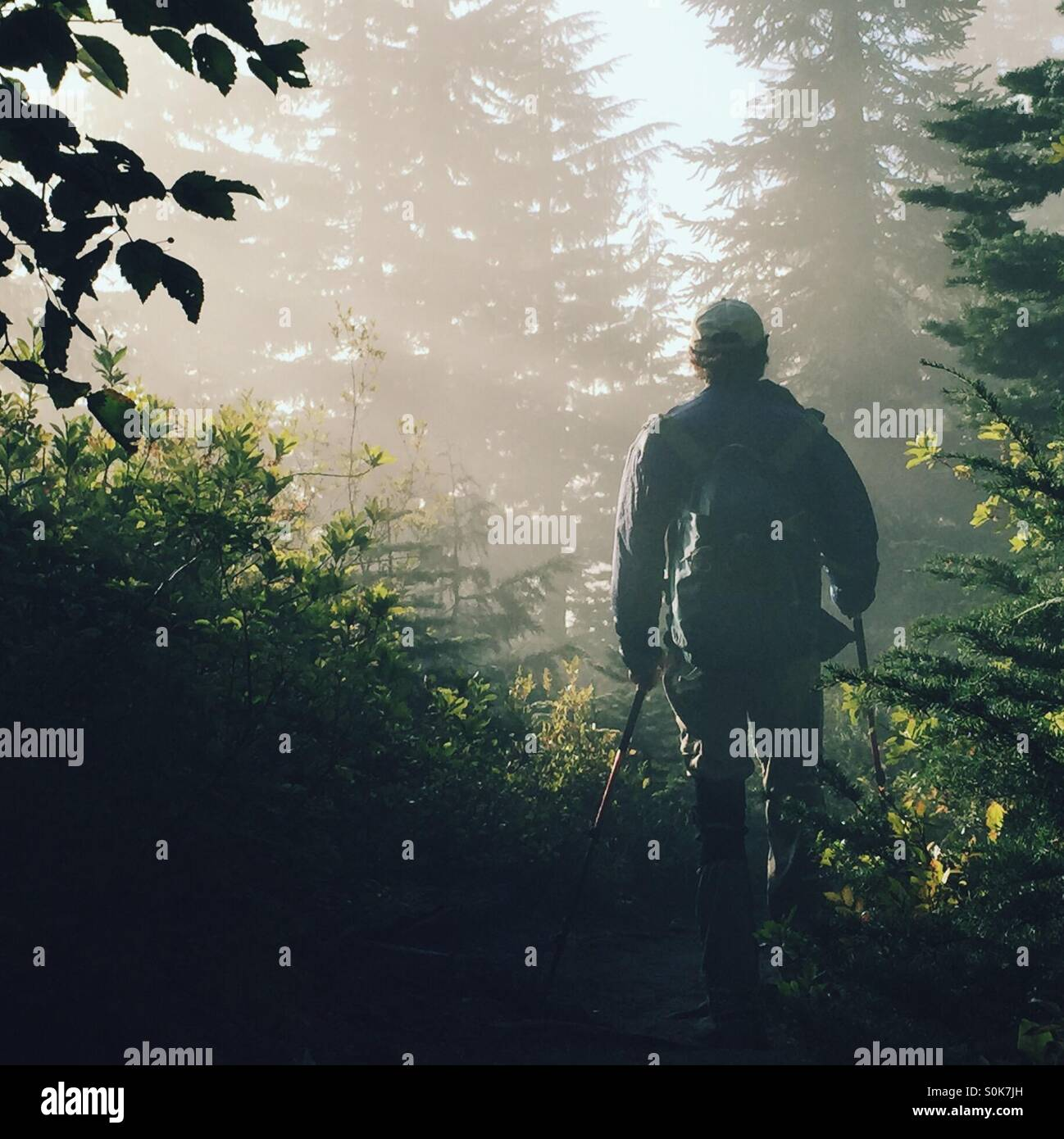Silhouette of a hiker in the forest - Stock Image