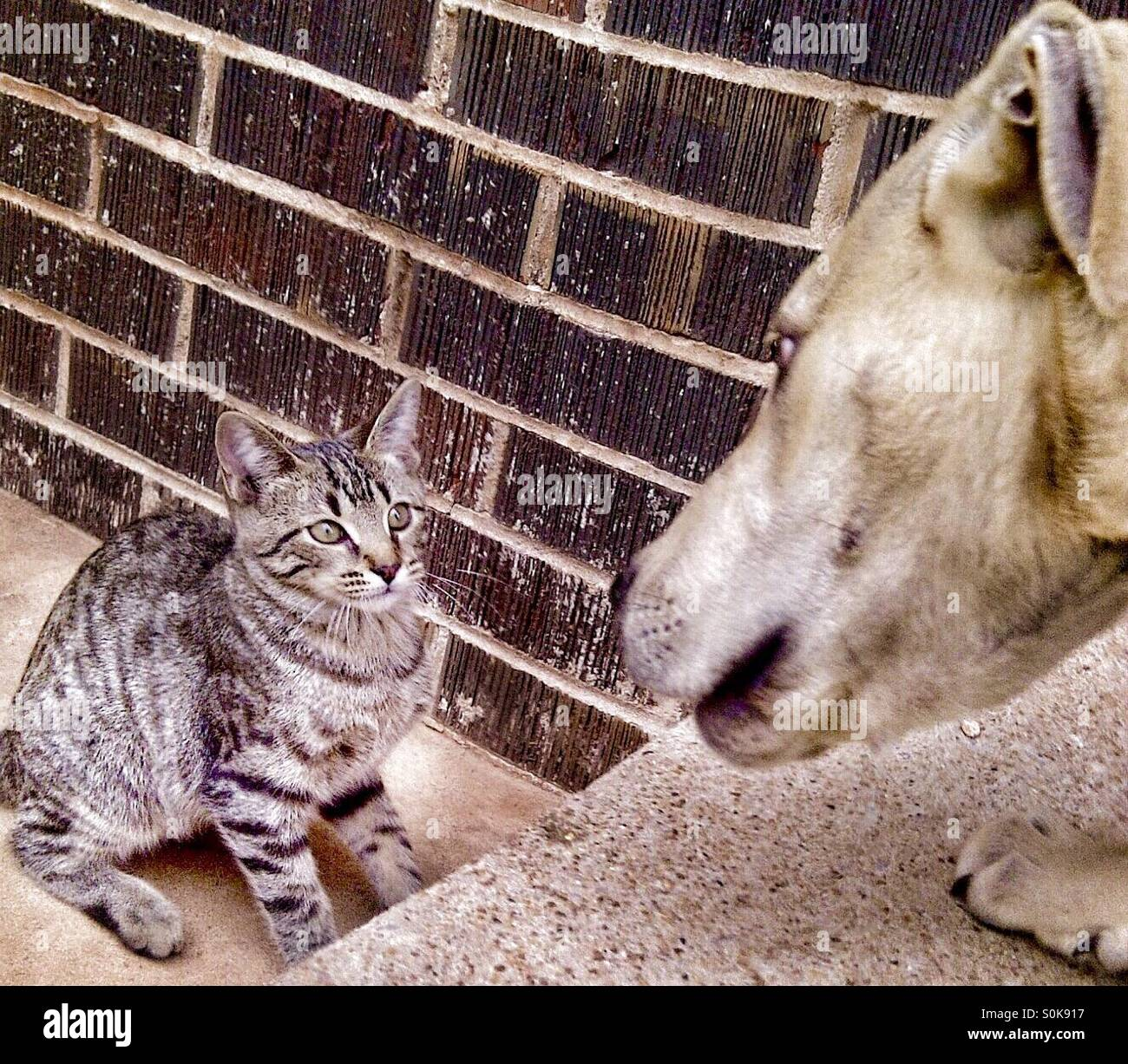 Stare down between cat and dog - Stock Image