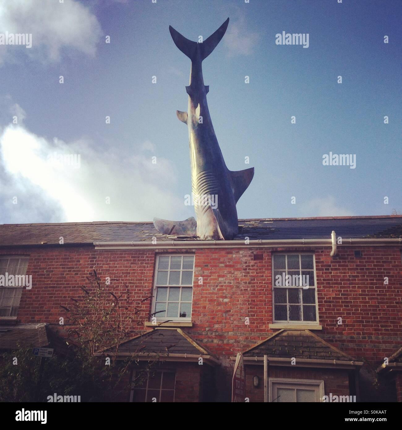 Real Shark Stock Photos & Real Shark Stock Images - Alamy