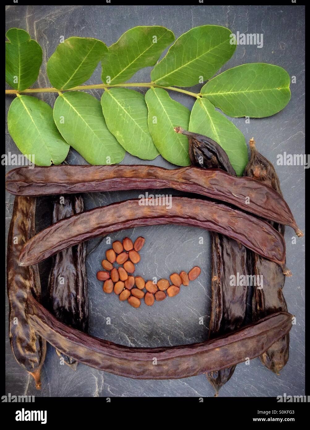 Carob Tree Pods