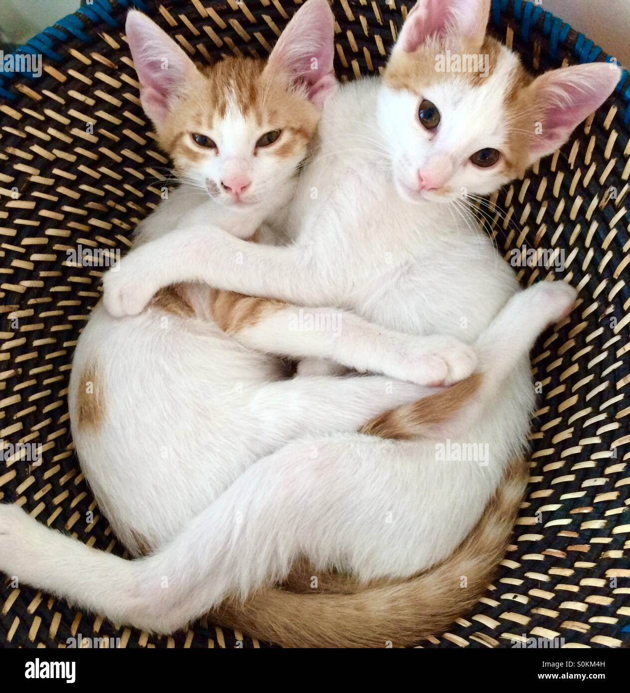 Brotherly love - Stock Image