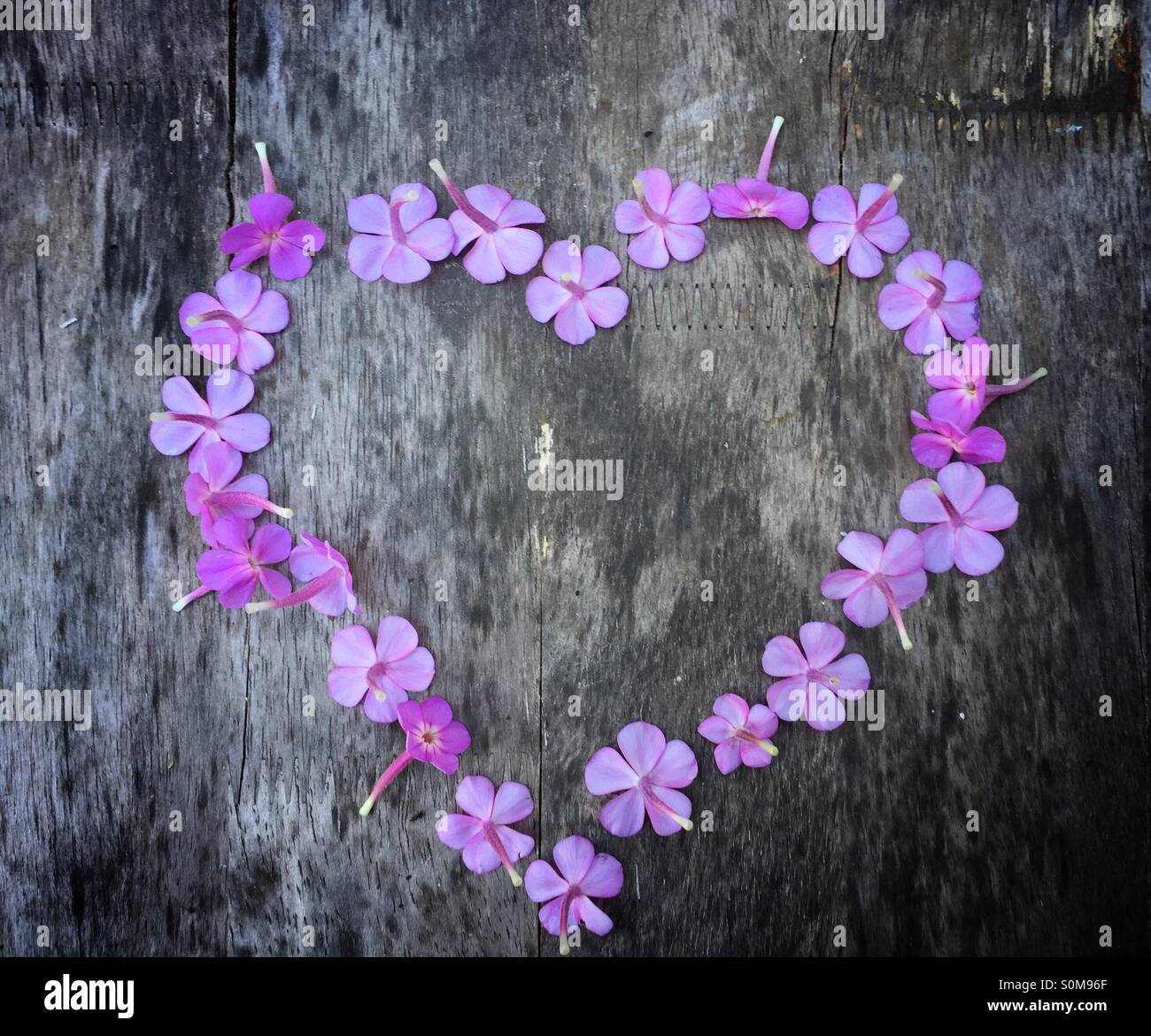 For the Love of Flowers - Stock Image