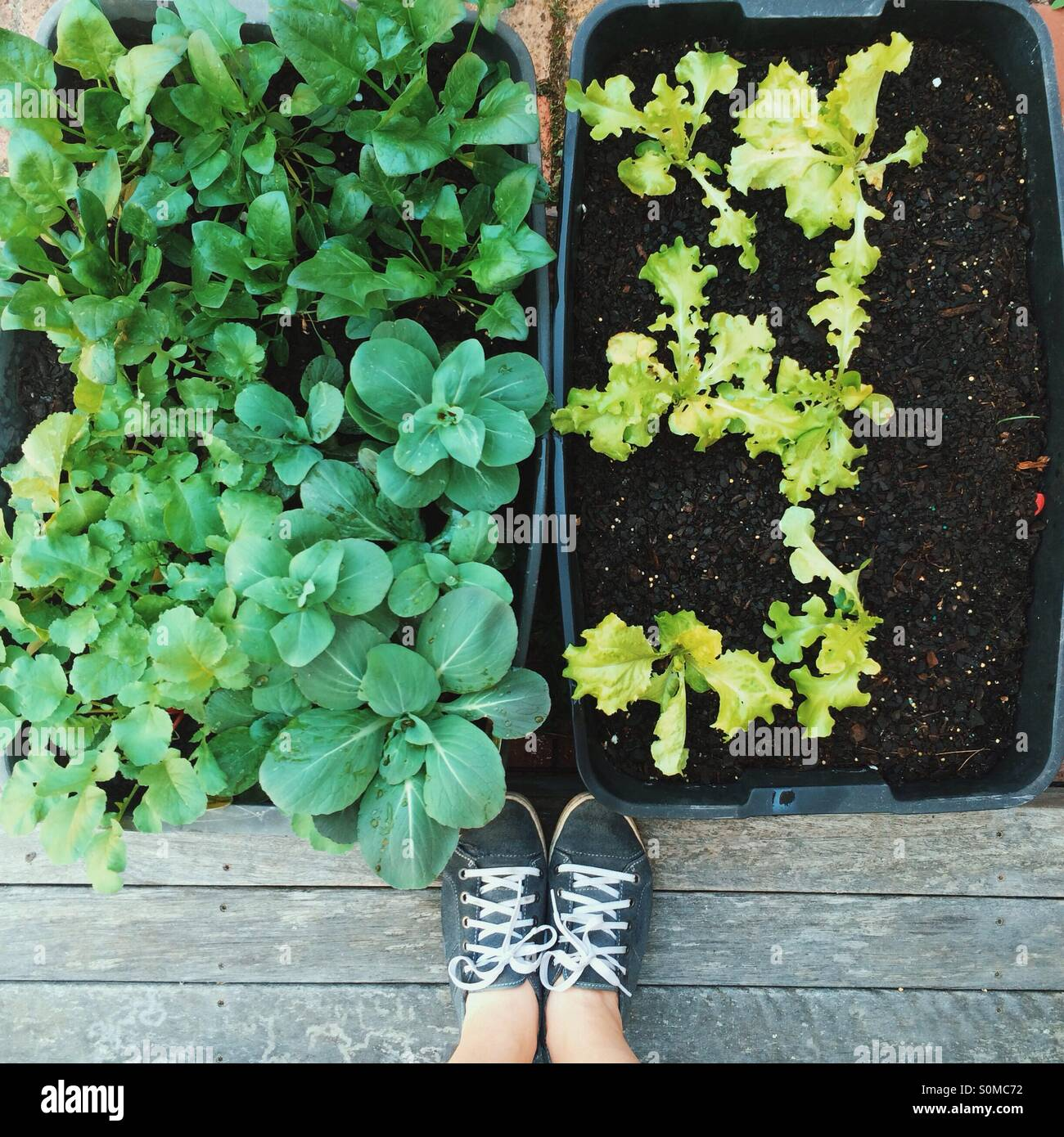 Urban container gardening - Stock Image