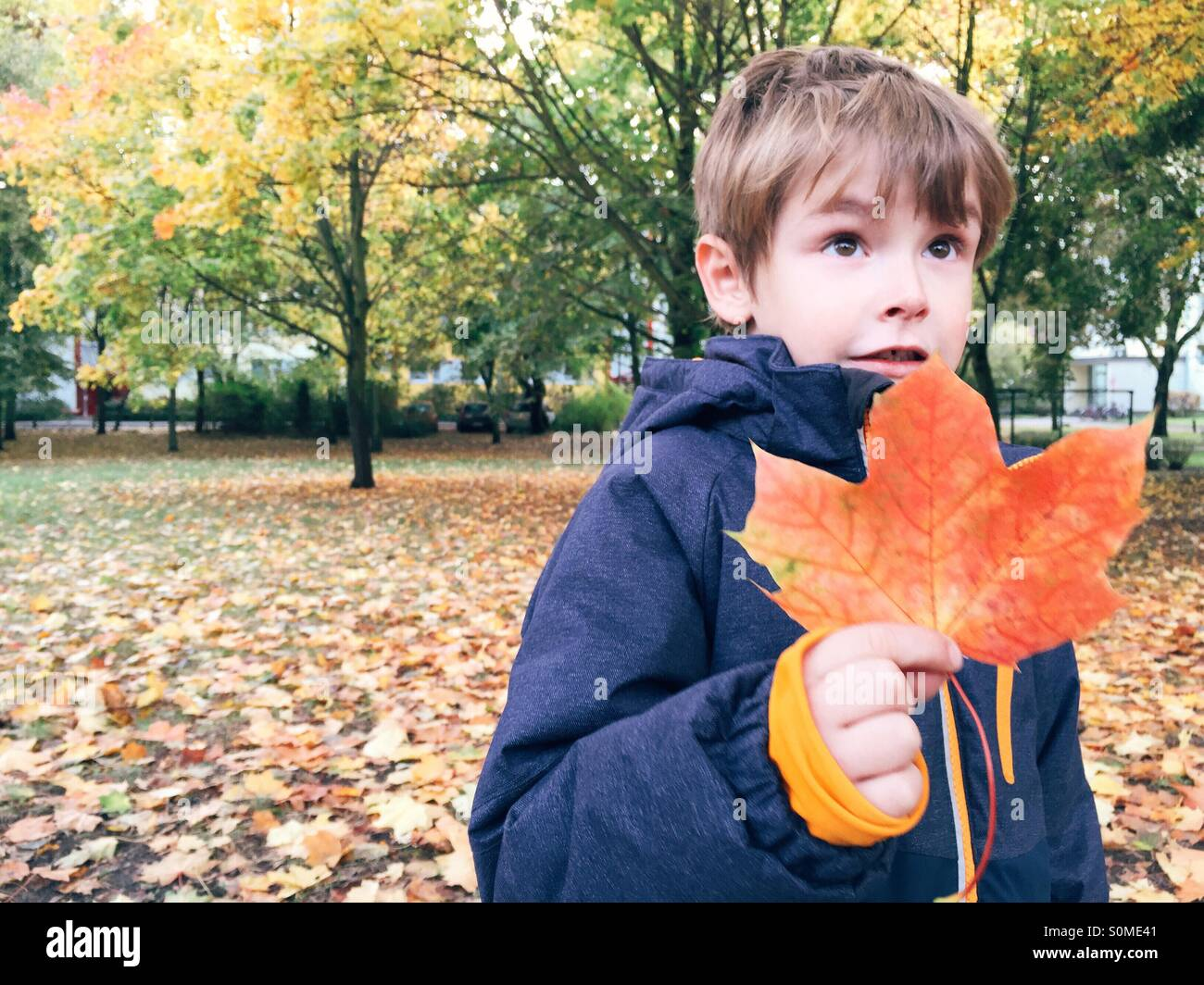 Young boy holding red colored leaf in fall - Stock Image