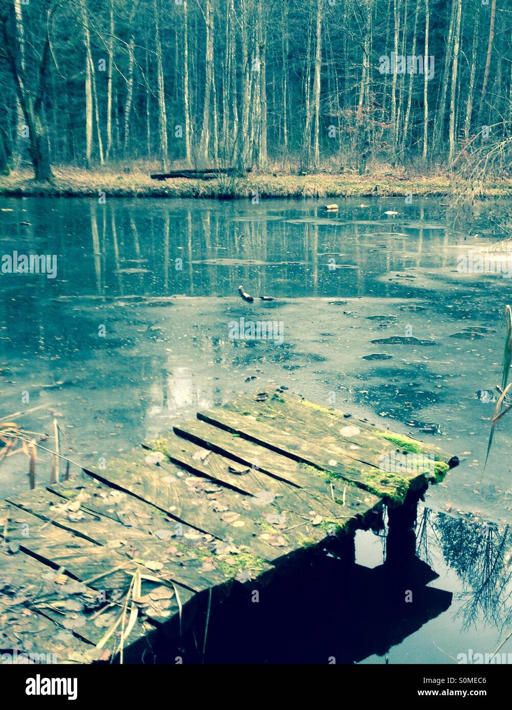 Tranquillity of forest pond - Stock Image