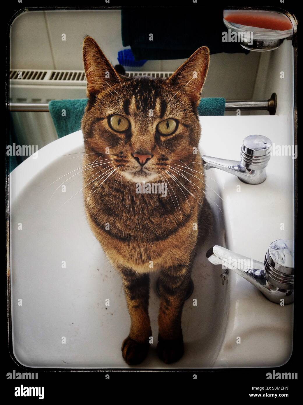 Angry looking cat sitting in a wash basin looking at the camera - Stock Image