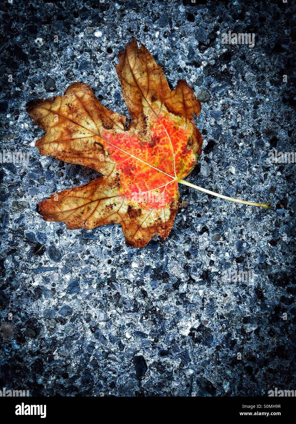 Autumn colors on asphalt. Colorful leaf on the floor. Stock Photo