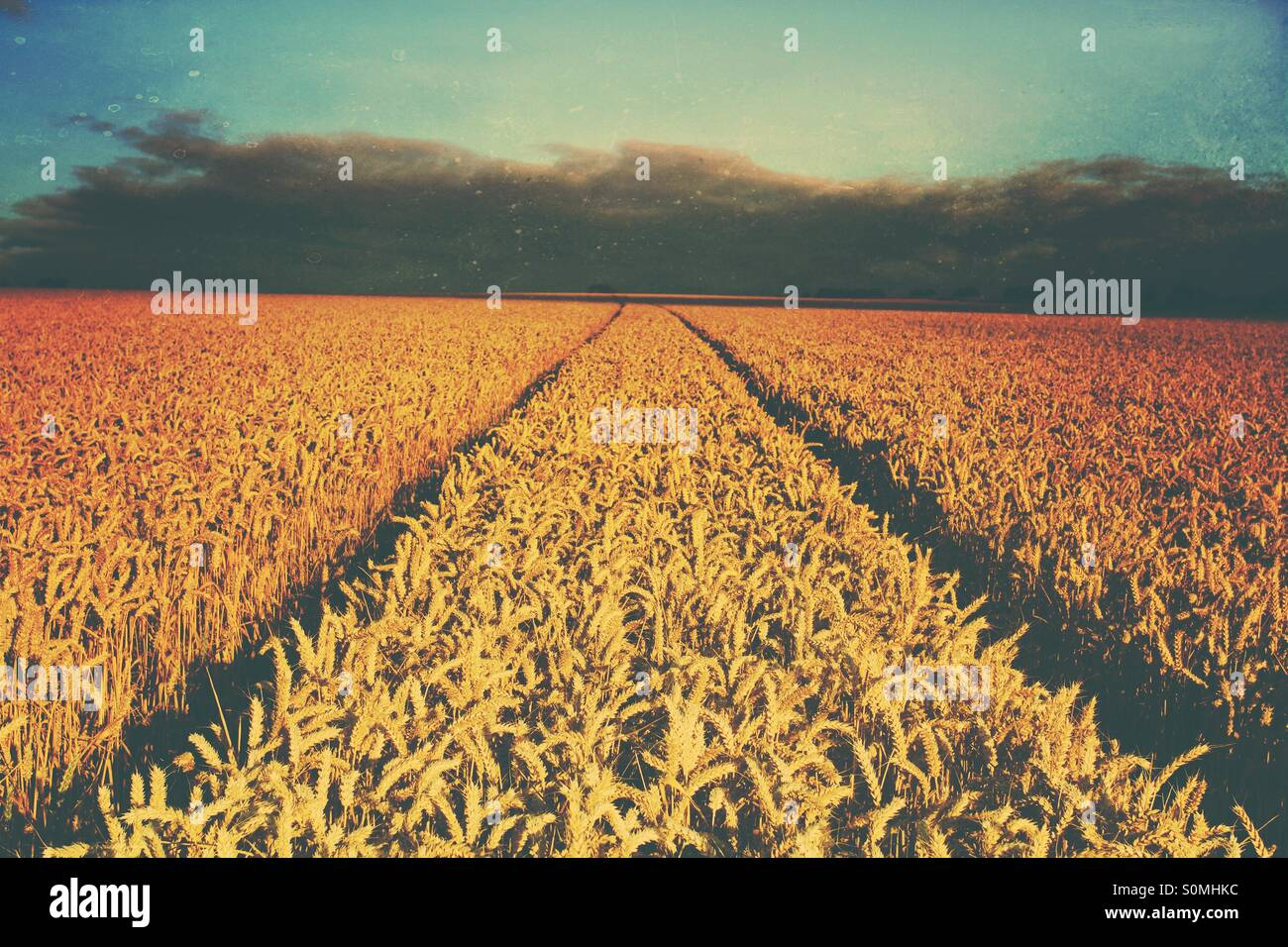 Tractor tracks disappearing into the darkness through a field of wheat. Vintage texture added. - Stock Image