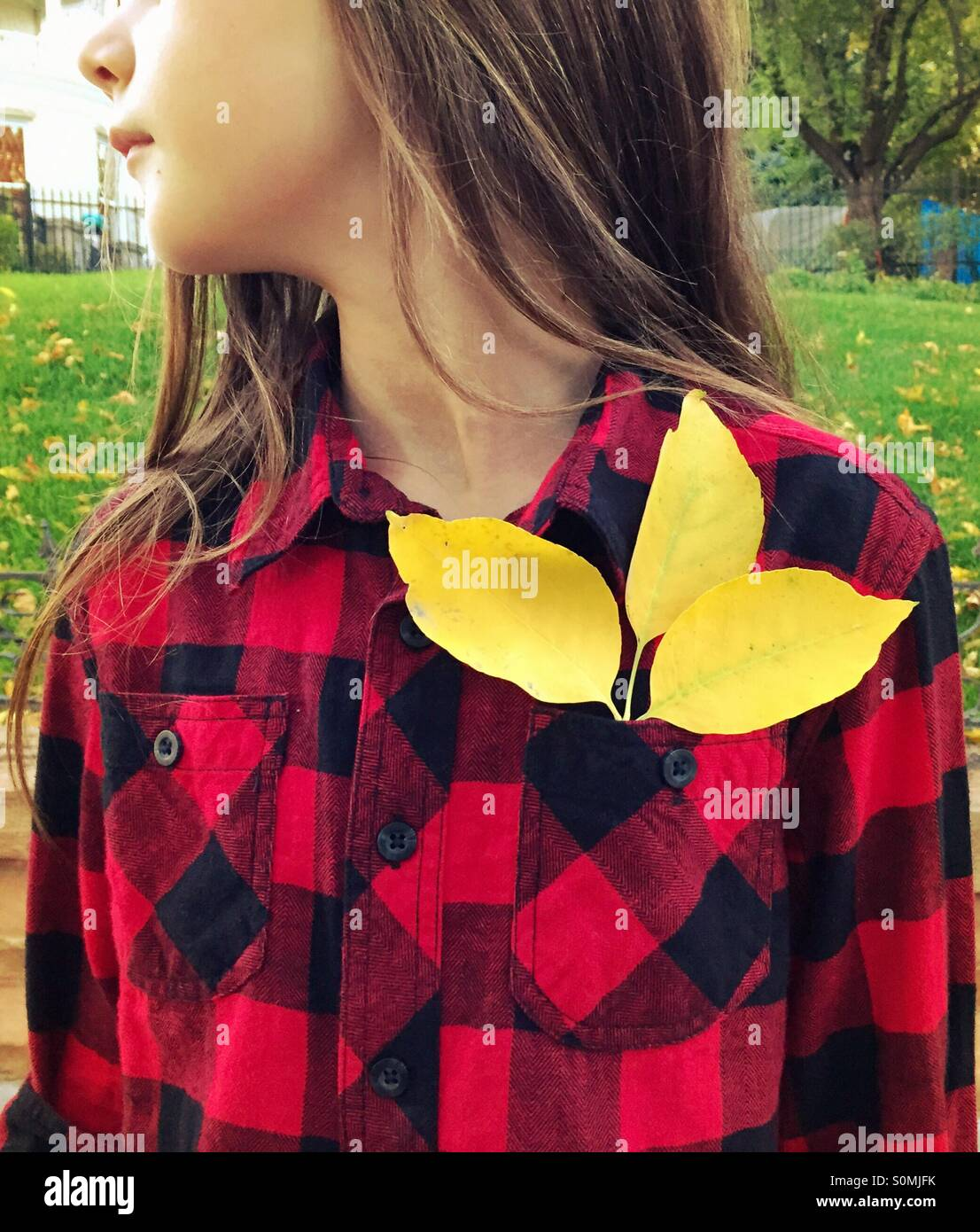 A young girl wearing Red and black buffalo-checked plaid shirt has 3 yellow leaves in her shirt pocket. - Stock Image
