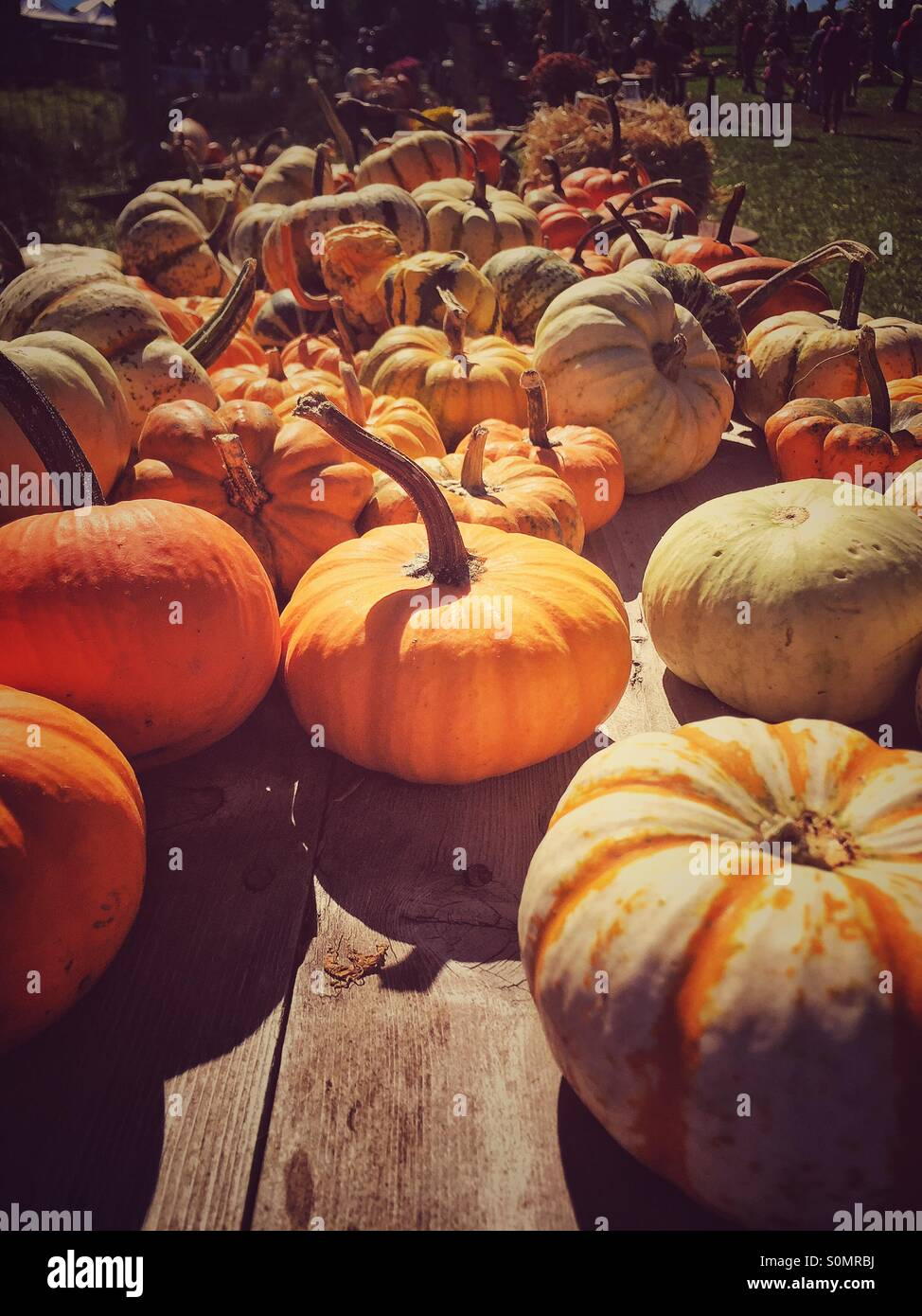 Pumpkin season Stock Photo