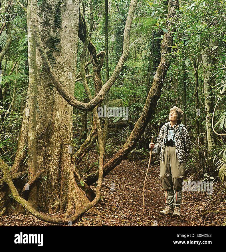 Woman, age 69, walking in tropical rainforest, Lamington National park, Queensland, Australia - Stock Image