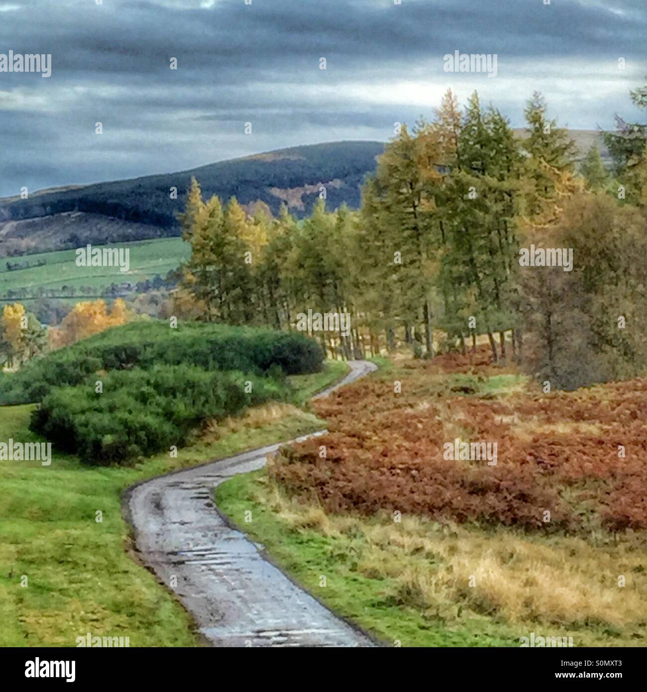 Rainy day walk in Perthshire - Stock Image