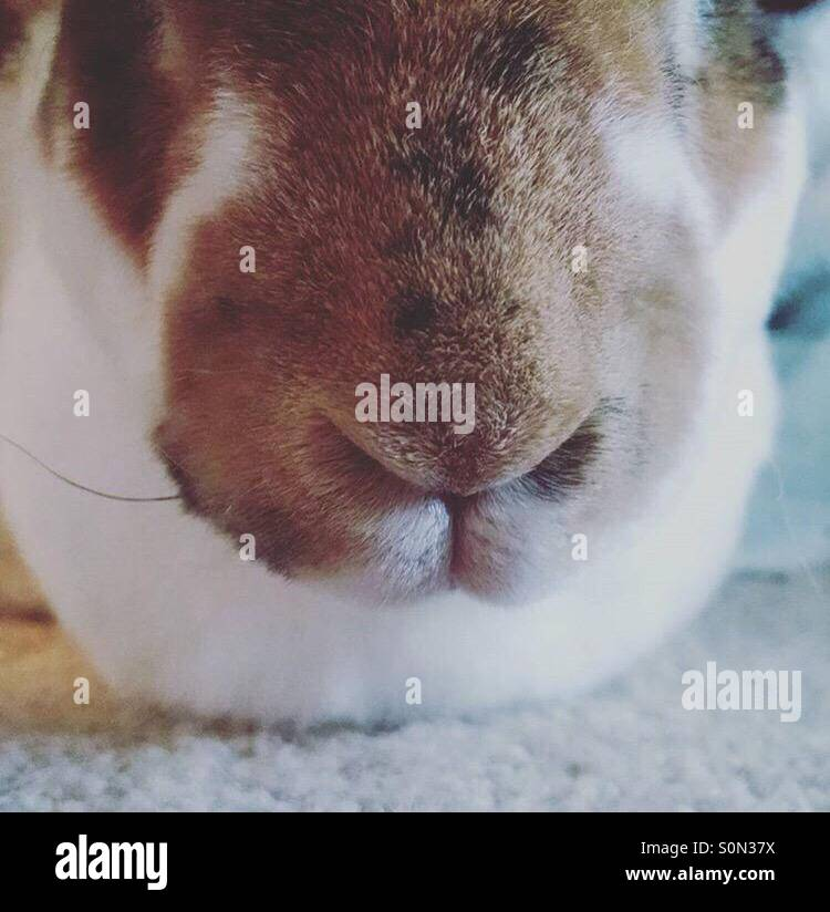 Bunny noses - Stock Image
