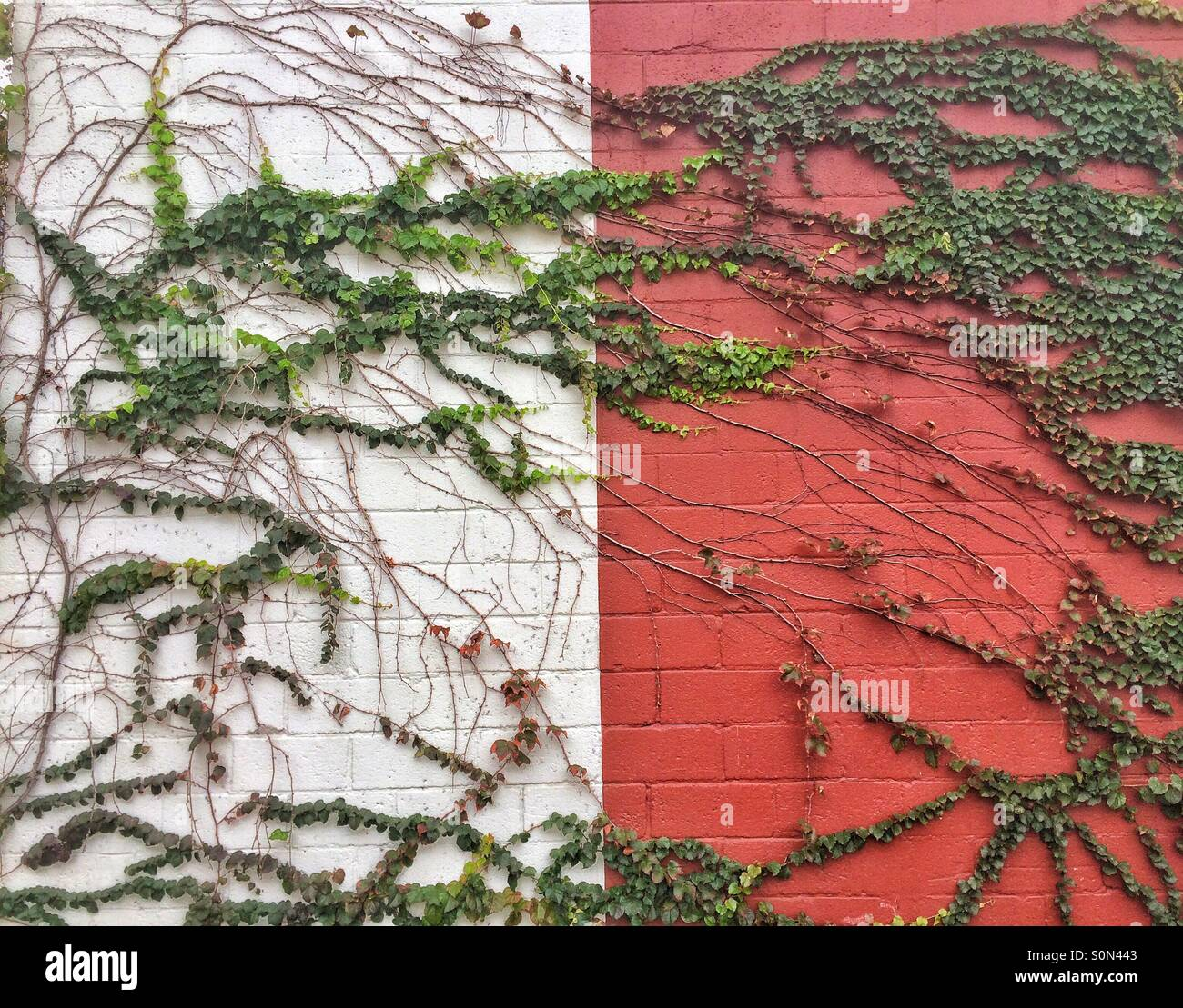 Vines on wall - Stock Image