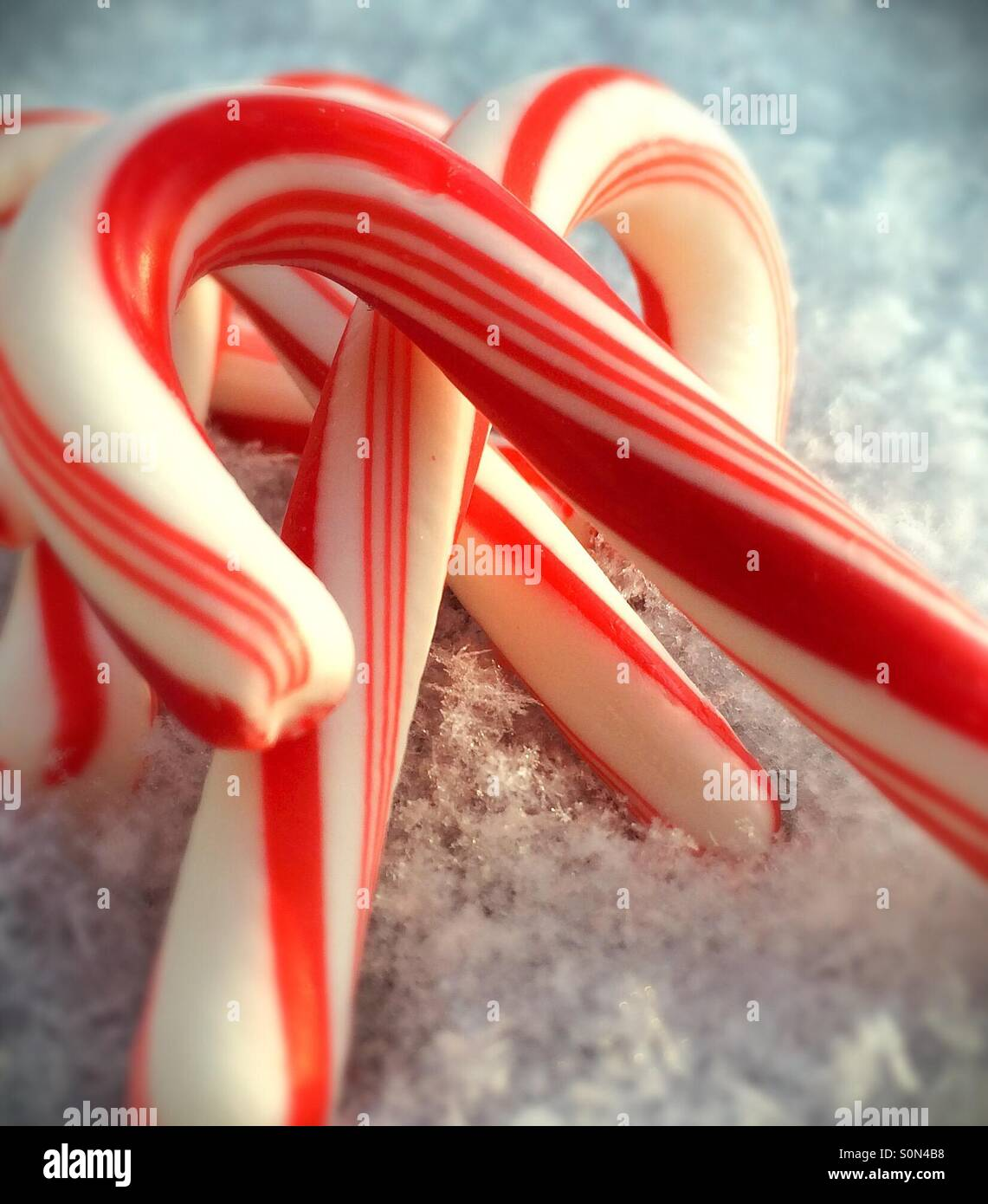 Closeup of candy canes in fresh snow - Stock Image