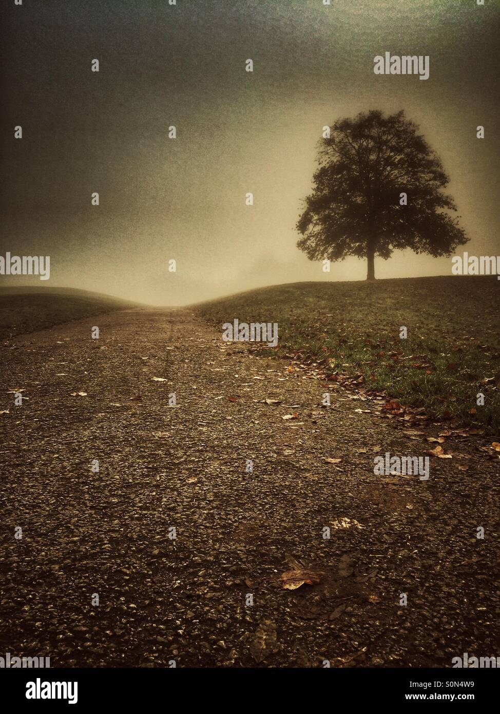 Lone tree in the countryside - Stock Image