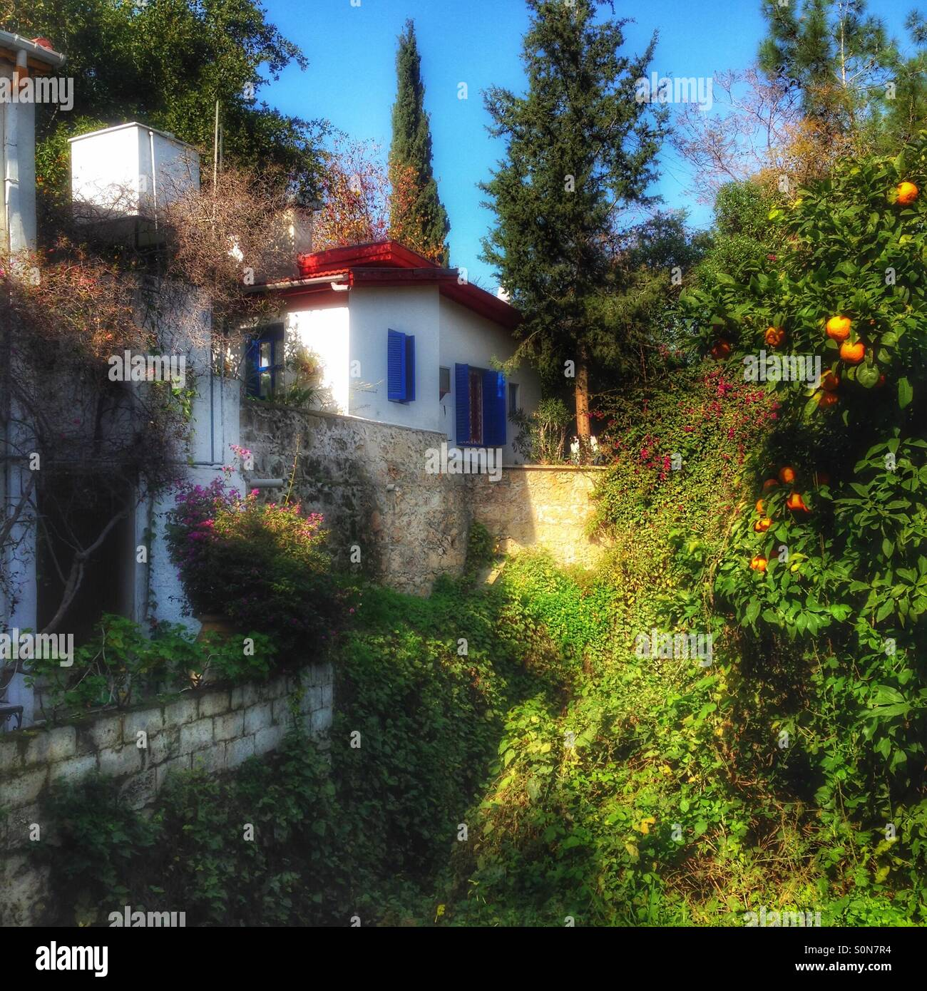 Gardens, orange trees and houses of north cyprus Stock Photo