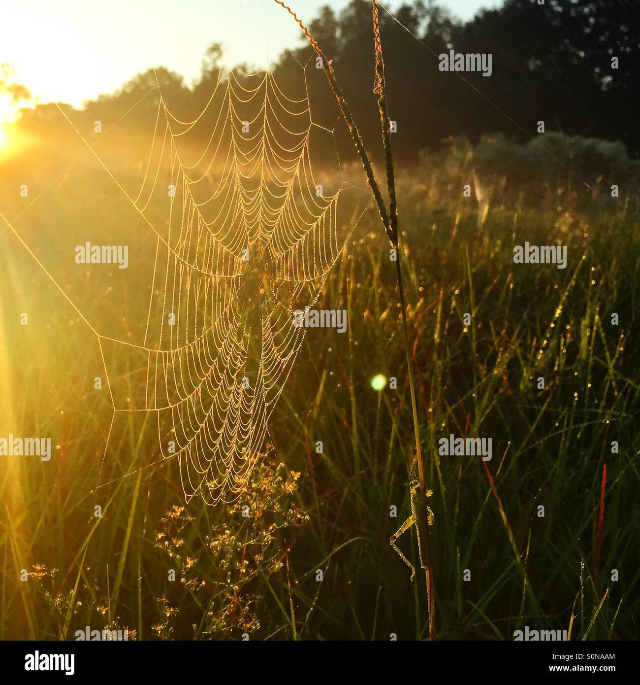 Early morning sun shining on a dew covered spiderweb. - Stock Image