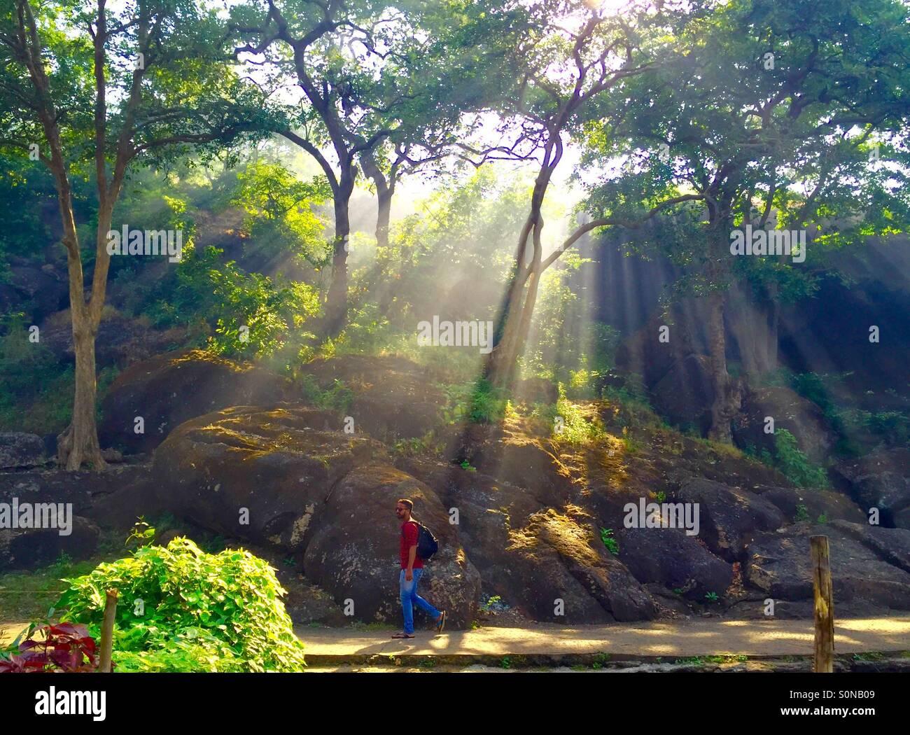 Winter mornings in sanjay gandhi national park. - Stock Image