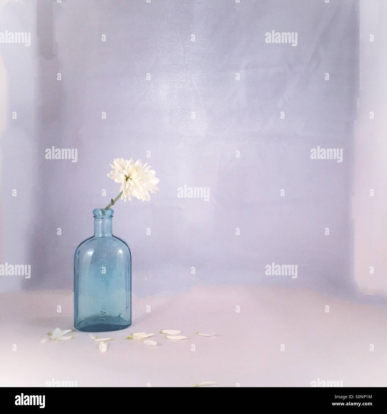 Blue Bottle White Flower Stock Photo 310264912 Alamy