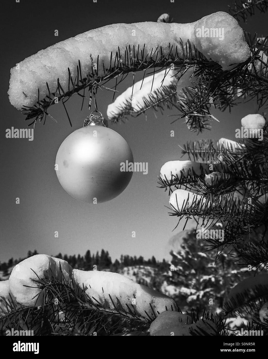 christmas ornament on a tree outdoors on a sunny cold day in black and - Christmas In Black And White