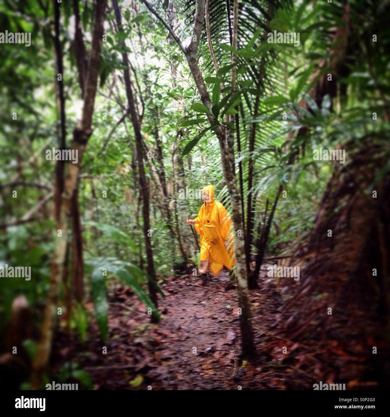 A tourist walks in a trail in the forest near Chechen Ha cave, Cayo, Belize - Stock Image