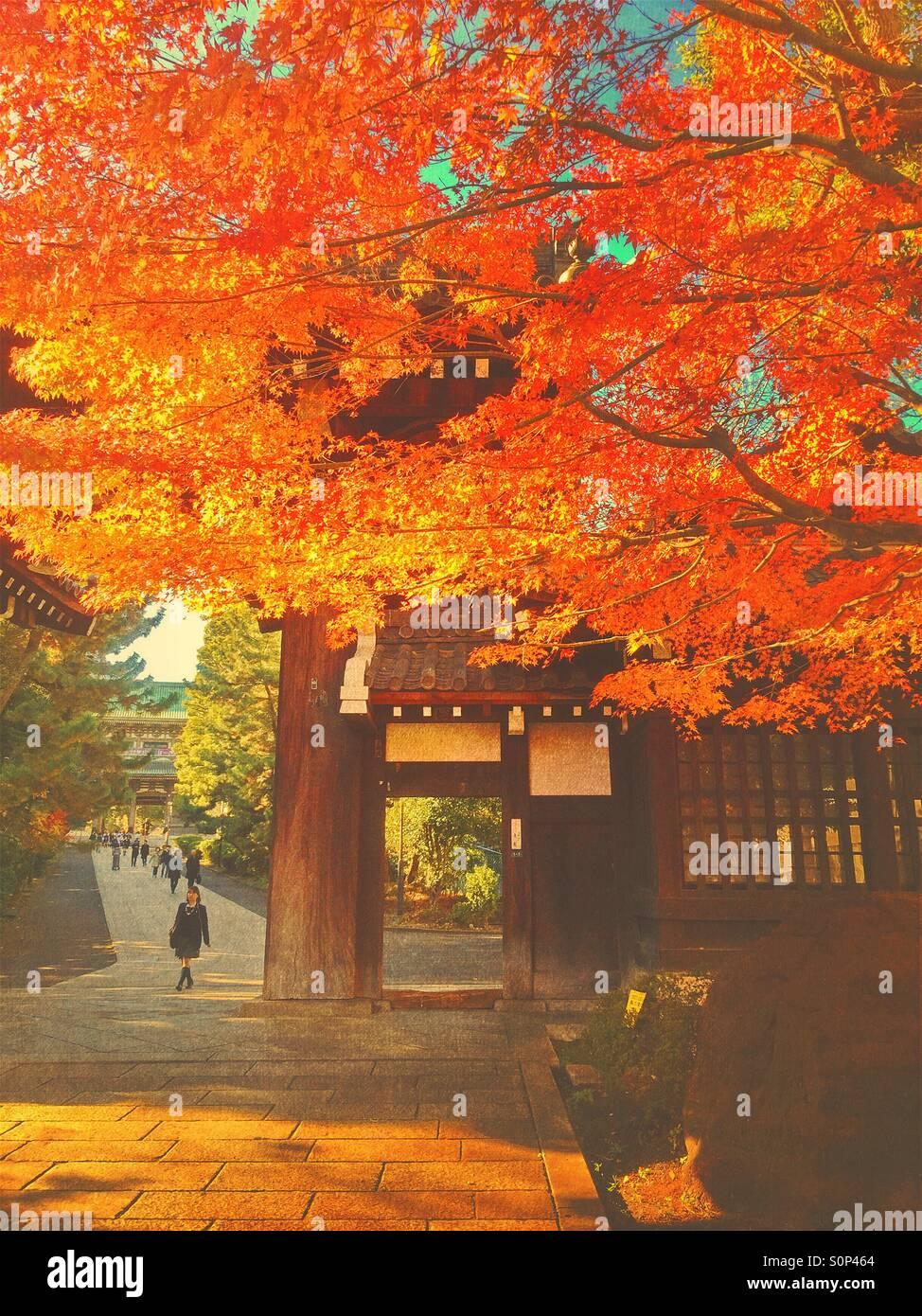 Beautiful fall scene with people and vibrant autumn foliage at Soji-ji Buddhist temple in Yokohama, Japan. VintageStock Photo
