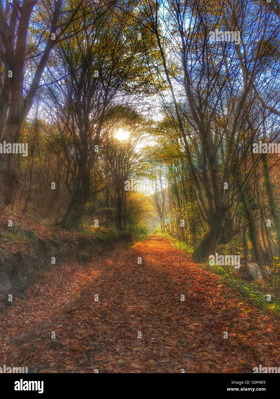 Autumn dream Stock Photo
