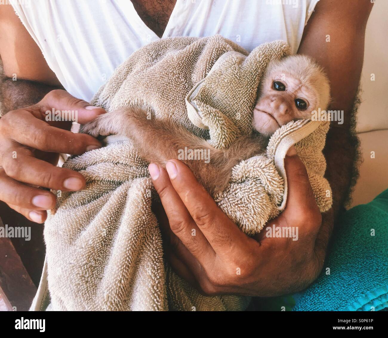 Hurt monkey in a towel - Stock Image