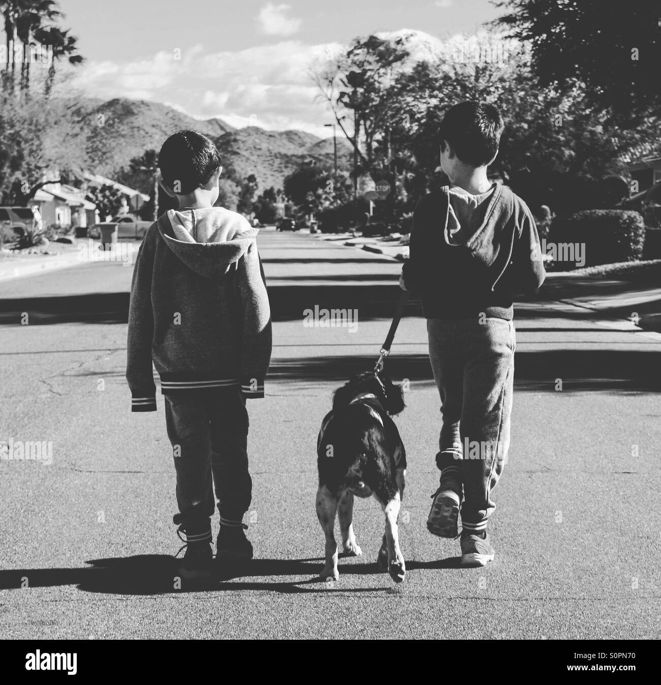 Brothers taking their elderly dog for a walk in the neighborhood - Stock Image