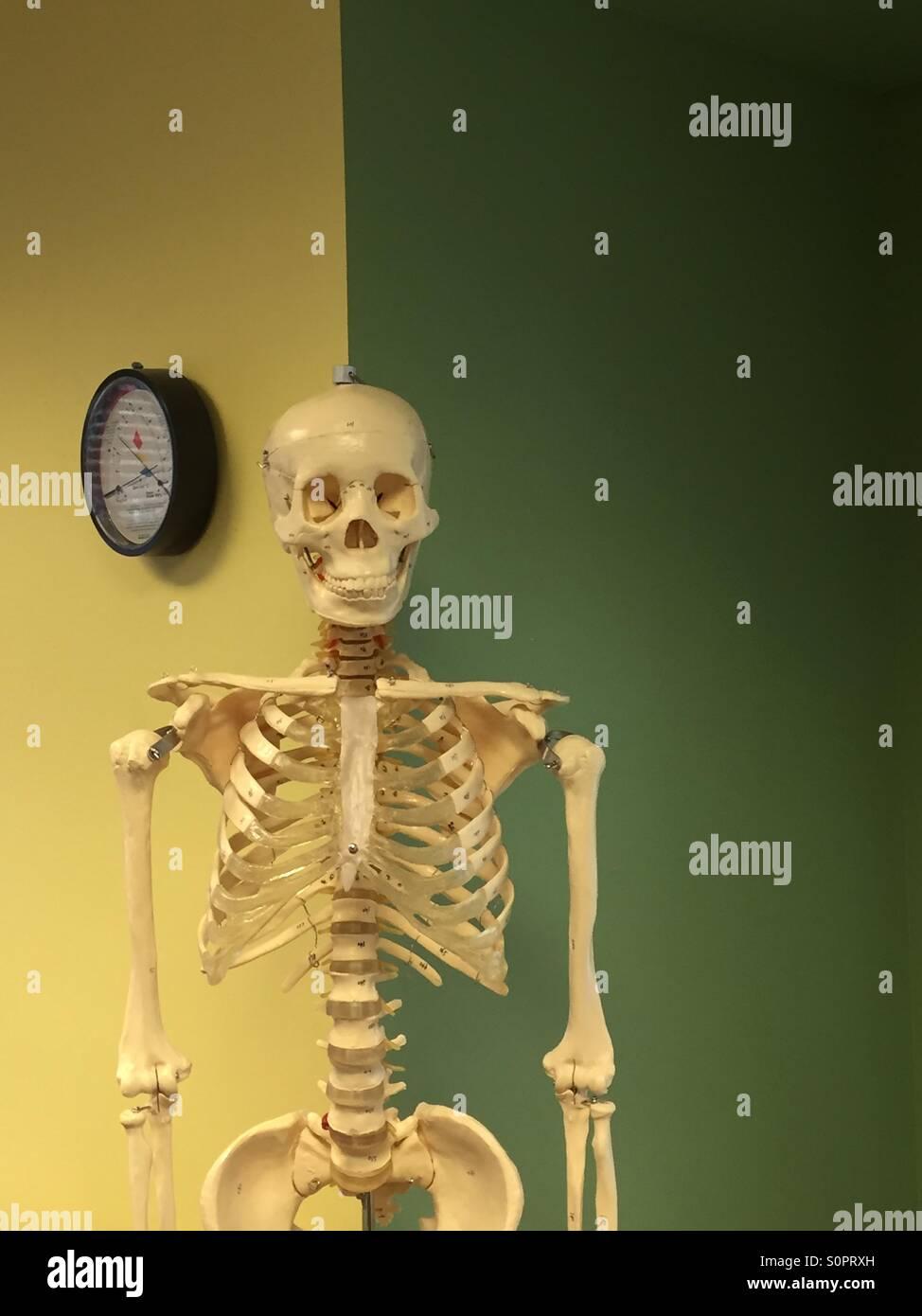 Skeleton. - Stock Image