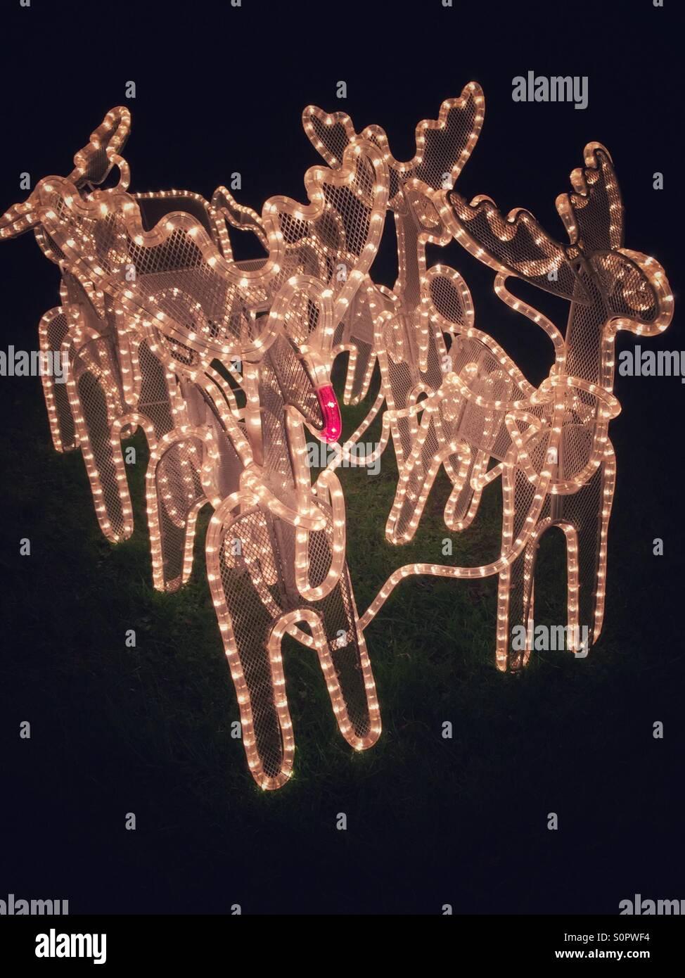 Santa's Christmas reindeer and sleigh garden lights - Stock Image