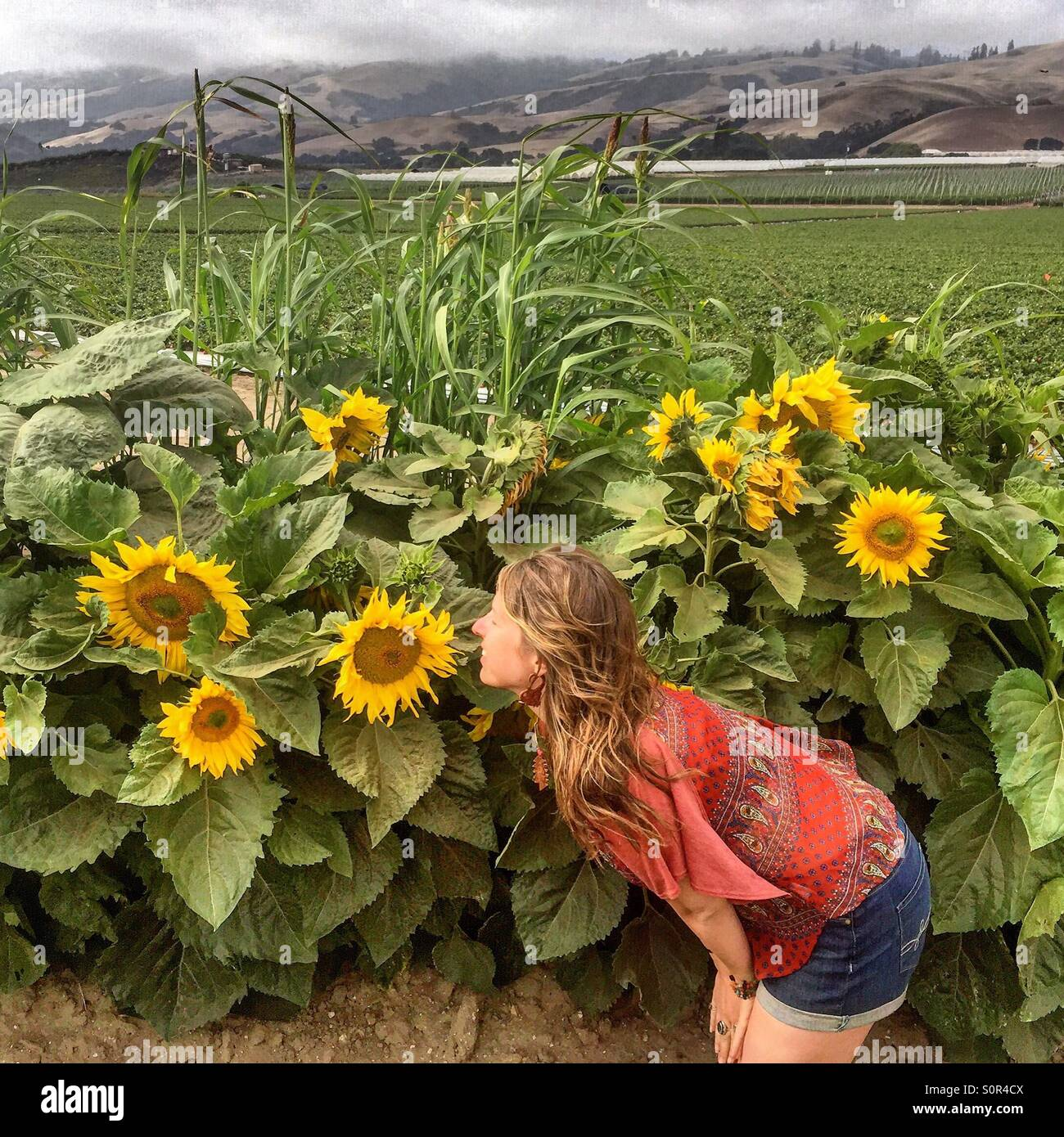 Sometimes you just have to stop and smell the flowers! Stock Photo