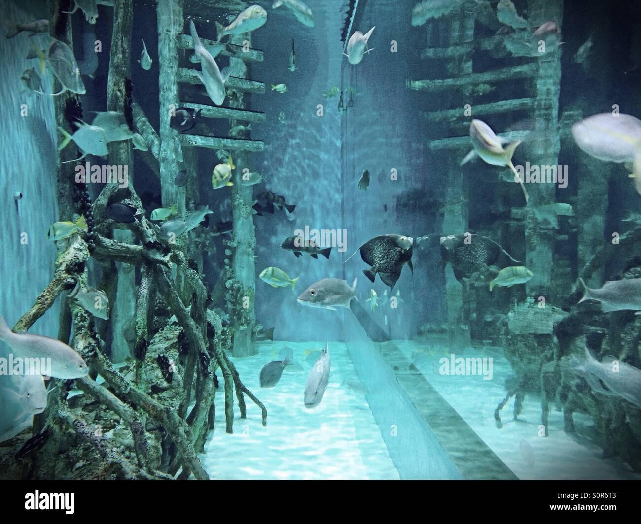 Oceanarium in St. Petersburg: address, photo, reviews 82